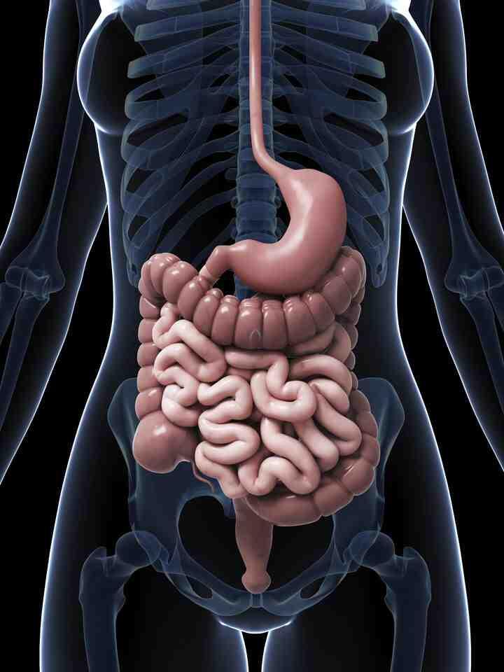 Quelles sont les boissons qui facilitent la digestion?